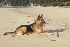 Lupa (Luisluey) Tags: amigos perro animales pastor compaia aleman