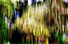 Obstblte am Bienenstand April 2016 (thomaskrumm) Tags: art painting lumix vegan soft paint neon unscharf abstrakt verwischt baumblte gx8 unschrfe obstblte imkerei laufleinwand schischkin tkrumm