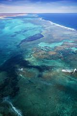 WA Coral Bay - 4603