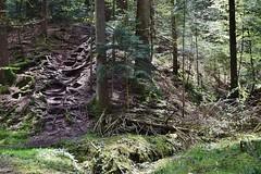 Wurzeltreppe beim Mhlenwanderweg (chrissie.007) Tags: welzheim remsmurrkreis kaisersbach mhlenwanderweg 20160430