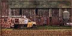 Honey Yellow  ...HTT (jackalope22) Tags: yellow trash truck bed rear textures ban thursday htt