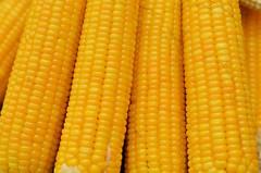 Corn (Smevin Paul - Thrisookaran !! www.smevin.com) Tags:  india paul photography corn tamil ooty nadu smevin smevins thrisookaran