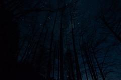 Midnight forestry silhouette (colinhansen1967) Tags: lovelynewflickr nikonflickraward trees silhouette stars sky canterbury newzealand mthuttretreat nikon d3200 tokina1116mm tokina longexposure