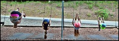 DSC_5369cfd (davids_studio) Tags: park girls girl fun swings teen flip preteen