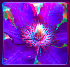 Clematis 1 - Anaglyph 3D (DarkOnus) Tags: flower macro closeup stereogram 3d phone pennsylvania clematis cell anaglyph stereo bloom stereography buckscounty huawei mate8 darkonus