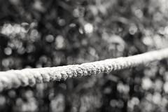 Tug of War (SaltyDogPhoto) Tags: blackandwhite bw monochrome 50mm prime nikon dof bokeh monochromatic rope depthoffield nikkor bnw nikonphotography nikkorafs50mm118g monochromebokehthursday nikond7200 saltydogphoto