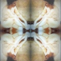 2016-05-30 symmetrical blurred nude  2 (april-mo) Tags: portrait blur art collage painting nude nu blurred symmetry symmetrical flouartistique womanportrait experimentaltechnique