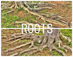 ROOTS (Arranion) Tags: life tree 20d nature canon eos 50mm diptych raw outdoor roots vivid stm f18 hdr outdoorbeauty therapee