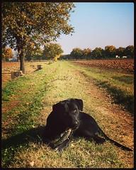 Pedro  #dog #dogs #ourdog #family #familytime #bestdog (Elena Dotti) Tags: dog square pedro squareformat mayfair mydog bestdog iphoneography instagramapp uploaded:by=instagram