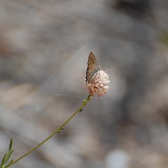 Mariposa (taylor_pj) Tags: butterfly insect mariposa insecto albufera
