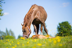 Total Happiness (keen-eyed) Tags: flowers summer horses horse cute nature beautiful foal