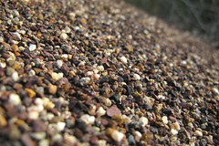 iridomyrmex purpureus mounds (Gary L Warner) Tags: insect ant mound animalarchitecture purpureus meatant iridomyrmex