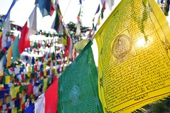 Prayer Flags, McLeod Ganj, Himachal Pradesh, India (Malc ) Tags: india photo photos dharamshala mcleodganj himachalpradesh kangra photosof malcc malcolmchapman malcolmpchapman