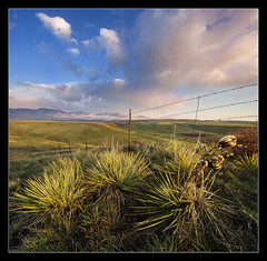 Catching The Sun (TylerPPorter) Tags: plants foothills sunrise landscape colorado colorful sony earlymorning bluesky professional rockymountains alpha lowclouds yucca barbedwirefence americanwest puffyclouds arvada pinkclouds verticalpanorama firstlight wildwildwest leyden a55 sigma1020 tylerporter vertorama