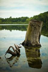 Stumpy (161/365) (fazz33 (Chris)) Tags: tree nature canon landscape photography 50mm stumpy stump 5d dslr markii f12l