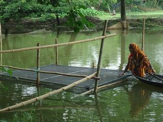A woman checks on her tilapia, Bangladesh. Photo by WorldFish.