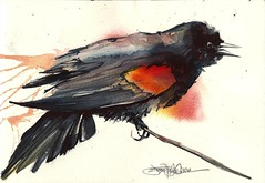 red winged (Jennifer Kraska) Tags: bird art watercolor jennifer redwingedblackbird kraska jenniferkraska