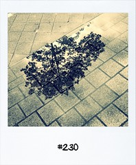 """#DailyPolaroid of 15-5-12 #230 • <a style=""""font-size:0.8em;"""" href=""""http://www.flickr.com/photos/47939785@N05/7227288402/"""" target=""""_blank"""">View on Flickr</a>"""