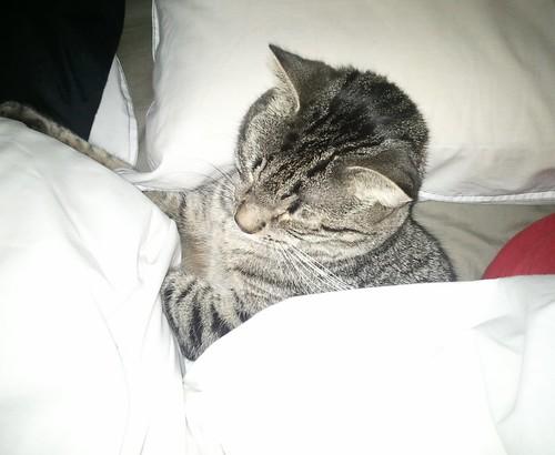 Coomfy Cat!