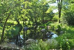 240512 (5) (deta k) Tags: park berlin water germany deutschland flora wasser natur pflanzen teich garten spiegelungen nikond3000