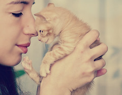 20/52: Nursing Tort (Marga Corameta) Tags: orange pet selfportrait love girl cat kitty gato sickness autorretrato gat moix 52weeks enfermo 52semanas