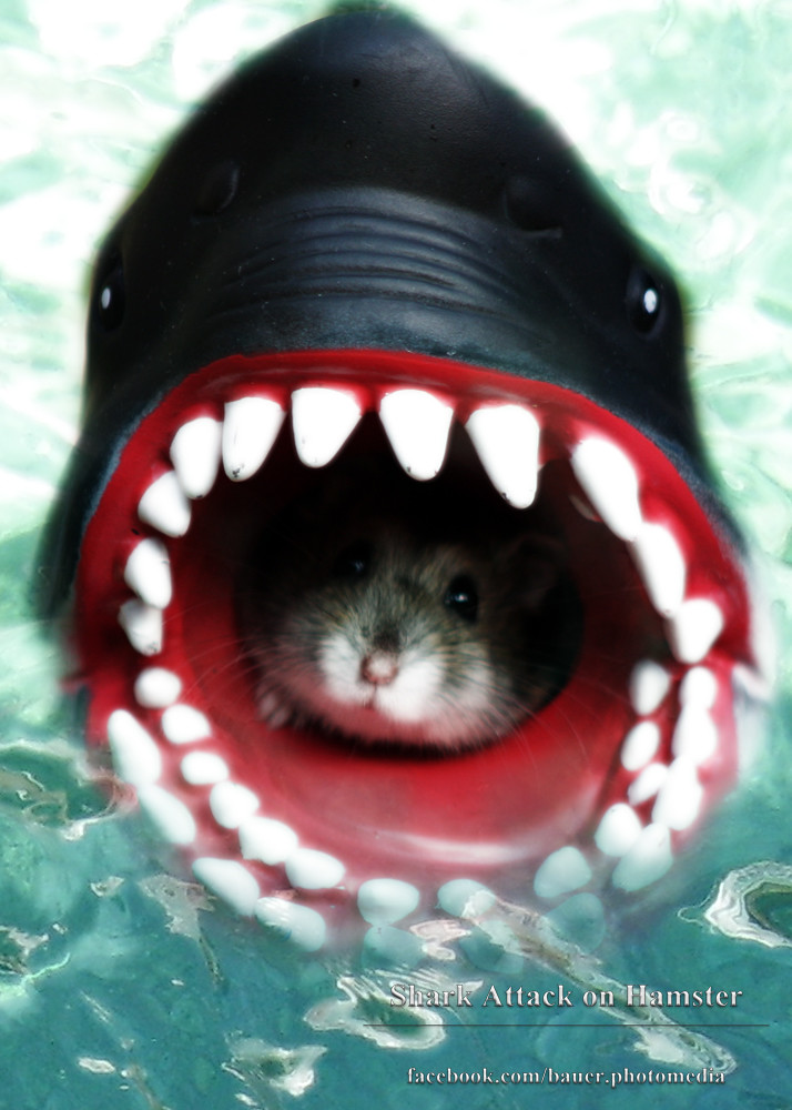Hamster Dyp Hals