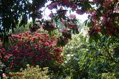 20120527_142321_Exbury Gardens_0023_P1010653.jpg (cscarlet41) Tags: lumix unitedkingdom hampshire device panasonic newforest 2012 exburygardens zs7