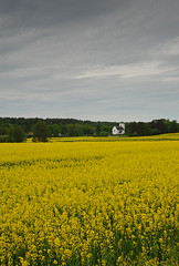 2012 05 26_d700_0071 (swedgatch (Missing my Father)) Tags: summer art nature spring nikon sweden swedgatch