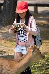 Nara, Japan (john.gillespie) Tags: park cute japan kids temple japanese stag deer kawaii schoolchildren nara schoolgirl