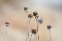 gathering (kimt15) Tags: nature beauty garden outdoors spring weeds peace
