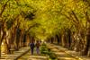 A saturday (Nejdet Duzen) Tags: trip travel tree nature turkey walking spring türkiye izmir selçuk bahar ağaç turkei seyahat doğa yürüyüş ilobsterit
