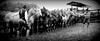 Empeçando a lida... (Eduardo Amorim) Tags: horses horse southamerica field brasil criollo caballo cheval caballos mare campo cavalos pelotas pferde cavalli cavallo cavalo gauchos pferd riograndedosul pampa champ hest hevonen campanha brésil chevaux mangueira gaucho égua 馬 yegua américadosul häst gaúcho 말 campero amériquedusud лошадь gaúchos 马 sudamérica suramérica américadelsur סוס südamerika crioulo caballoscriollos criollos حصان άλογο costadoce camperos americadelsud ม้า crioulos cavalocrioulo americameridionale caballocriollo campeiros potreiro auffangen campeiro cavaloscrioulos ঘোড়া