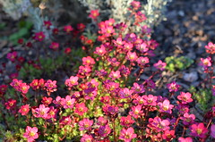 Spring evening sunshine (Heathermary44) Tags: flowers sunlight nature beautiful evening spring bright outdoor flowerbed