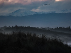Mounds, Mists and Mountains (Steve Taylor (Photography)) Tags: morning pink blue trees winter newzealand christchurch cloud mist mountain black silhouette forest landscape grey dawn flying seagull gull dune perspective canterbury foliage nz southisland layers southernalps newbrighton northnewbrighton