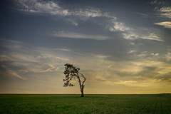lone tree (Redheadwondering) Tags: sigma50mmdgmacro sonya7rii wiltshire spring sunset twilight landscape trees lonetree clouds googlenikcollection a7ii α7ii