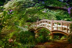 Royal Roads Japanese Garden1 (jsnmckenzie) Tags: bridge japanesegarden bc britishcolumbia victoria rru hatleycastle royalroads colwood japanesefootbridge