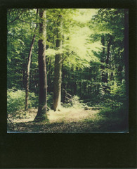 LOST (fabien hoyois) Tags: forest sx70 switzerland geneve genf polaroidsx70 gva 600film switzerlandlandscape impossibleproject
