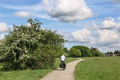 Hob Moor, May 2016 - 3 (nican45) Tags: york white tree slr bike bicycle canon blossom yorkshire may sigma cycle dslr 1770 hawthorn cycleroute 2016 1770mm hobmoor eos70d 1770mmf284dcmacro 22may2016 22052016