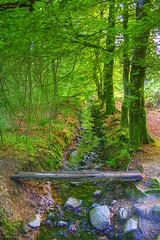 Forest Stream (Billy McDonald) Tags: forest scotland stream hdr balloch