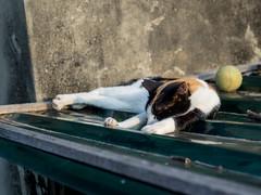 P4085742 (daisuke1230) Tags: cat olympus neko em  m43