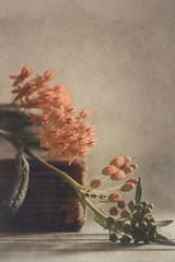 Orange (Ro Cafe) Tags: flowers light stilllife orange book textured nikond600 nikkormicro105f28