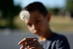 Beautiful Hideous Weeds (JasonCameron) Tags: boy summer cute kid weed focus dandelion dop
