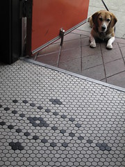 Lying in wait (dschweisguth) Tags: sanfrancisco tile mosaic foundinsf huxleybeagle