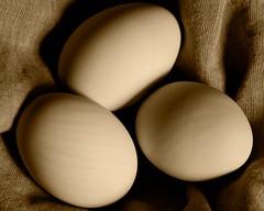 sepia eggs (Hel Kat) Tags: texture sepia contrast studio easter spring linen eggs softbox duckeggs