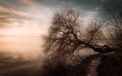Winter Tree (Igor Krieg) Tags: winter sunset lake tree deutschland sonnenuntergang jahreszeit natur himmel starnberg spiegelung baum starnbergersee reise mirroring gewsser lnder starnberglake