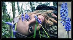 week 15. (claireaphina) Tags: woods 15 week weeks bluebell 52