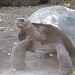 "BIO 245: Ecology of Ecuador<a href=""http://farm8.static.flickr.com/7077/7142158939_f60d106b0d_o.jpg"" title=""High res"">∝</a>"
