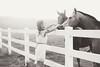 Horses (Danielle Pearce) Tags: sunset horses white black girl canon fence mark country ii 5d