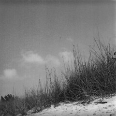 Between Earth and Sky (dreamscapesxx) Tags: blackandwhite tlr florida lookingup 120film atthebeach twinlensreflex beachgrass ilfordfp4plus125 yashicamatem passagrillebeach expiredin2005 betweenearthandsky beneaththedune