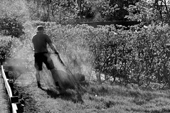 (Steini789) Tags: trees shadow bw grass fence blackwhite bush lawn lawnmower dust mowingthelawn